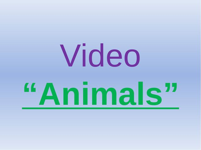 "Video ""Animals"""