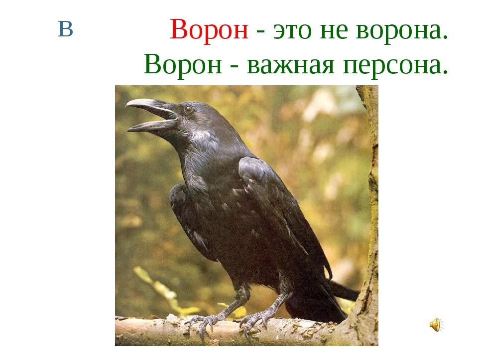 Ворон - это не ворона. Ворон - важная персона. В