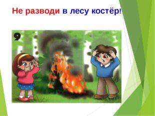 Не разводи в лесу костёр!