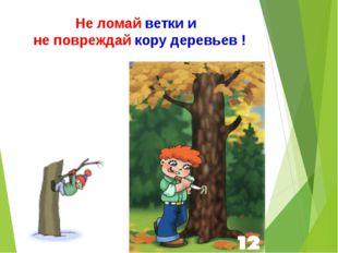 Не ломай ветки и не повреждай кору деревьев !