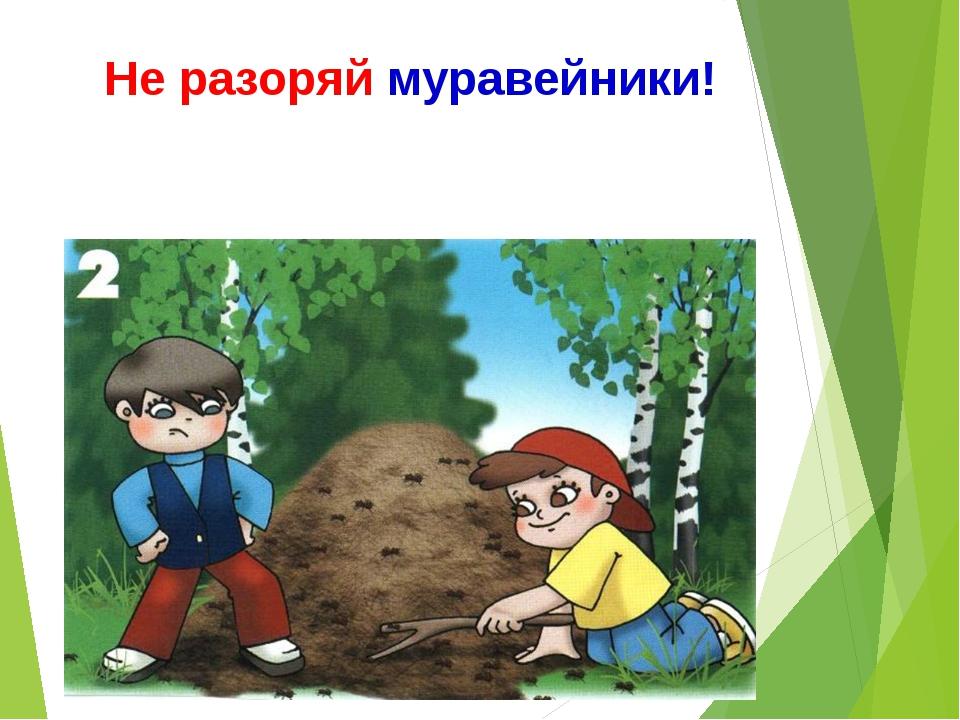 Не разоряй муравейники!