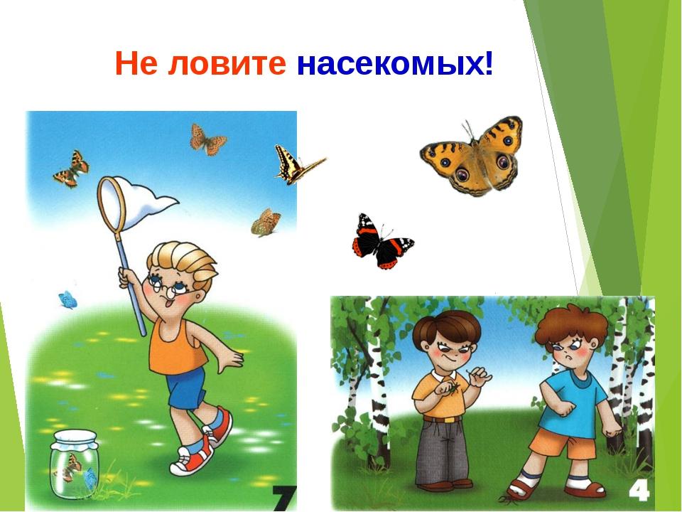 знак не ловить насекомых картинка делает фатальную