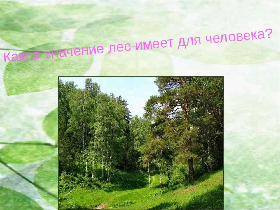 Какое значение лес имеет для человека?