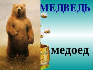 МЕДВЕДЬ медоед