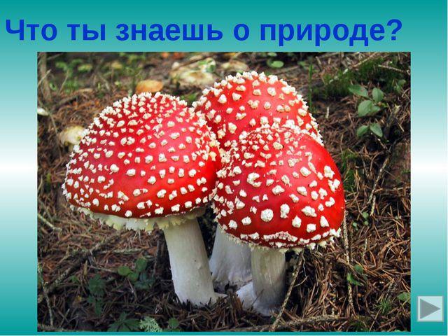 Ядовитый гриб с красной шляпкой в белых крапинках Что ты знаешь о природе?