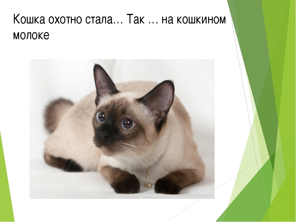 Кошка охотно стала… Так … на кошкином молоке