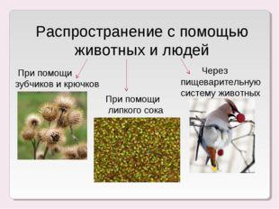 Распространение с помощью животных и людей При помощи зубчиков и крючков При