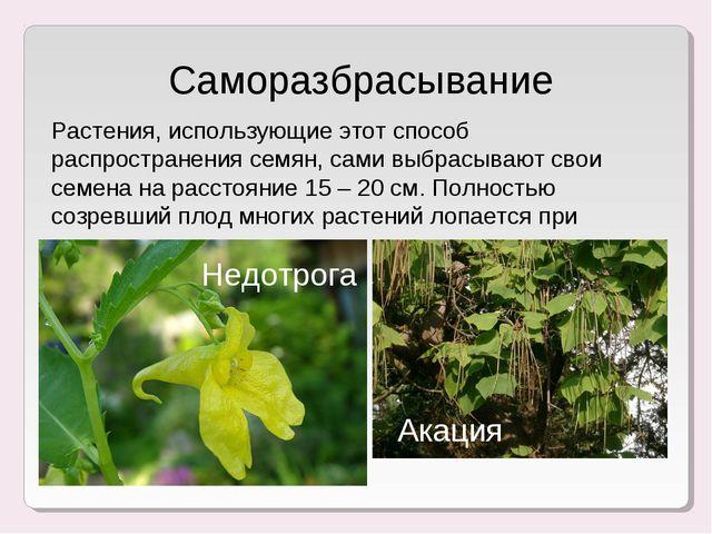 Саморазбрасывание Растения, использующие этот способ распространения семян, с...