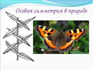 Осевая симметрия в природе