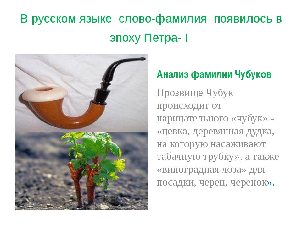 В русском языке слово-фамилия появилось в эпоху Петра- I Анализ фамилии Чубук...