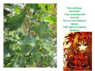 Вот дубочек молодой: «Ты зелененьким постой, После лета бабьего приду, Тебе д