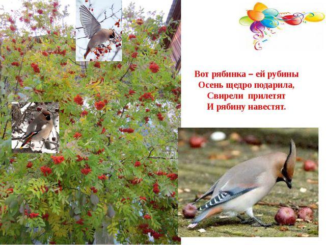 Вот рябинка – ей рубины Осень щедро подарила, Свирели прилетят И рябину навес...