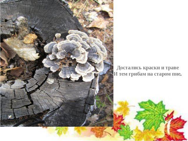 Достались краски и траве И тем грибам на старом пне.