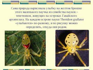 Сама природа нарисовала улыбку на желтом брюшке этого маленького паучка из се