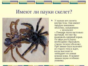Имеют ли пауки скелет? У пауков нет скелета внутри тела. Они имеют твердую вн