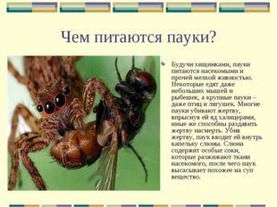 Чем питаются пауки? Будучи хищниками, пауки питаются насекомыми и прочей мелк