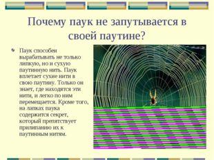 Почему паук не запутывается в своей паутине? Паук способен вырабатывать не то