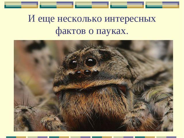 И еще несколько интересных фактов о пауках.