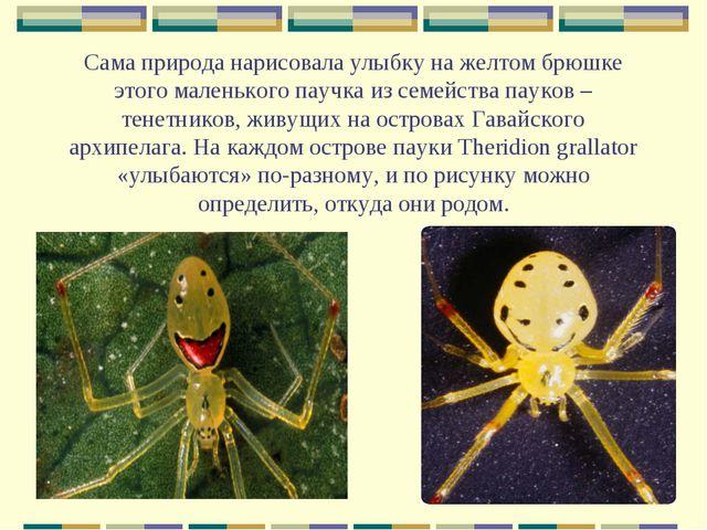 Сама природа нарисовала улыбку на желтом брюшке этого маленького паучка из се...