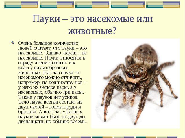 Пауки – это насекомые или животные? Очень большое количество людей считает, ч...