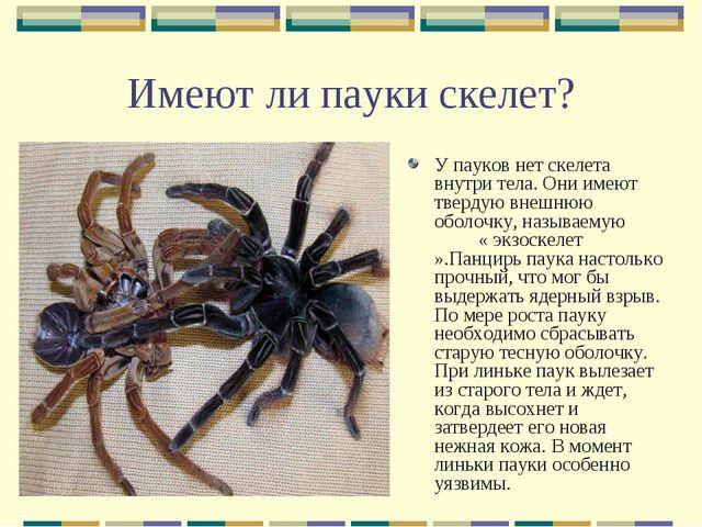 Имеют ли пауки скелет? У пауков нет скелета внутри тела. Они имеют твердую вн...