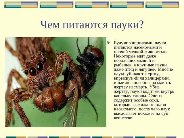 Чем питаются пауки? Будучи хищниками, пауки питаются насекомыми и прочей мелк...
