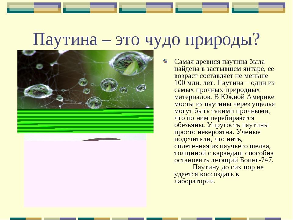 Паутина – это чудо природы? Самая древняя паутина была найдена в застывшем ян...