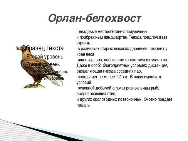 Орлан-белохвост Гнездовые местообитания приурочены к прибрежным ландшафтам Гн...