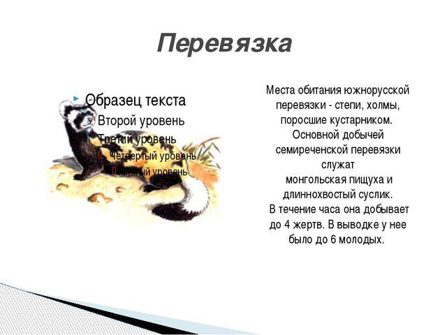 Перевязка Места обитания южнорусской перевязки - степи, холмы, поросшие куста...
