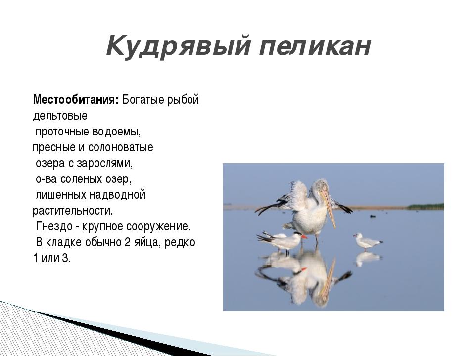 Кудрявый пеликан Местообитания: Богатые рыбой дельтовые проточные водоемы, пр...