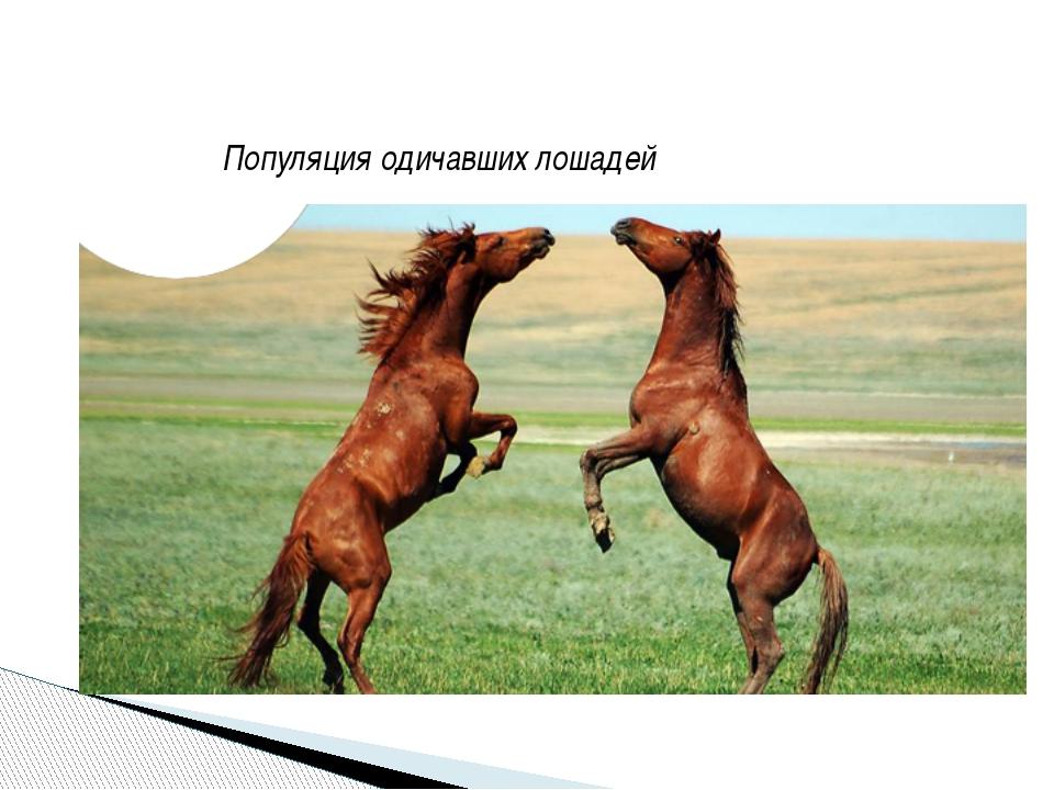 Популяция одичавших лошадей