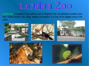 London Zoo is situated in the northern part of Regents Park. Its collections