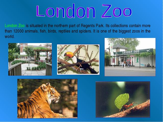 London Zoo is situated in the northern part of Regents Park. Its collections...