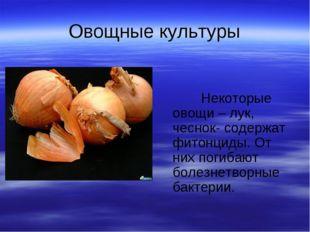 Овощные культуры Некоторые овощи – лук, чеснок- содержат фитонциды. От них по