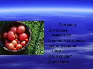 Помидор В огороде вырастаю. А когда я созреваю, Варят из меня томат, В щи кл