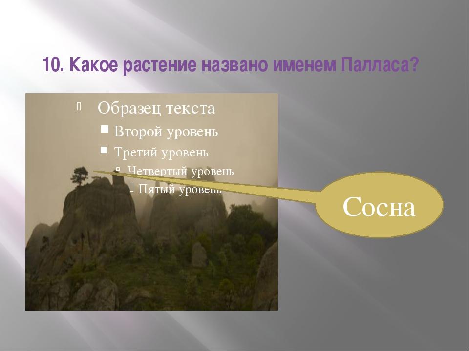 10. Какое растение названо именем Палласа? Сосна