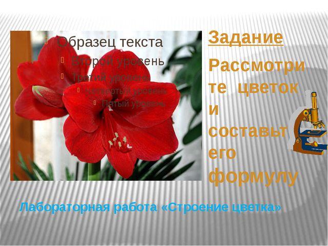 Лабораторная работа «Строение цветка» Задание Рассмотрите цветок и составьте...