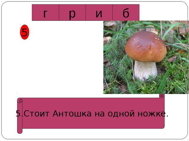5 5.Стоит Антошка на одной ножке. г р и б