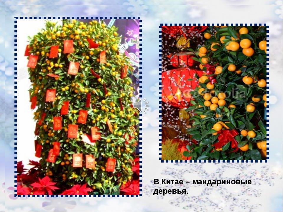 В Китае – мандариновые деревья. В Китае – мандариновые деревья.