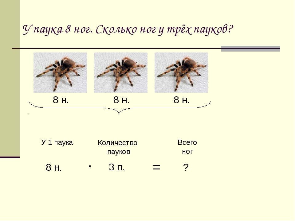 У паука 8 ног. Сколько ног у трёх пауков? 8 н. 8 н. 8 н. У 1 паука Количество...