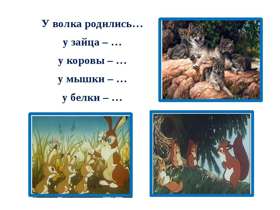 У волка родились… у зайца – … у коровы – … у мышки – … у белки – …