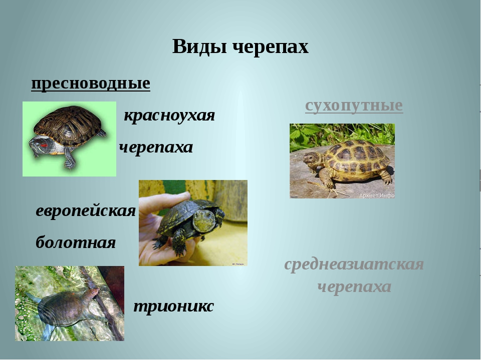Что делать если черепаха не впадает в спячку
