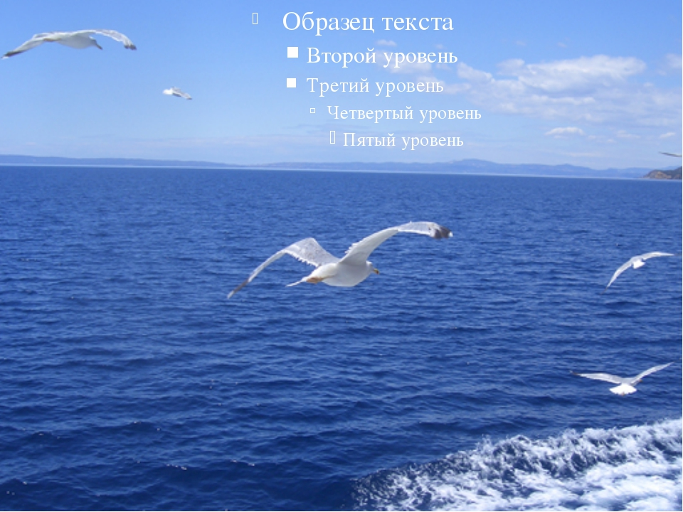 должно быть сон синее море и чайки зимнюю