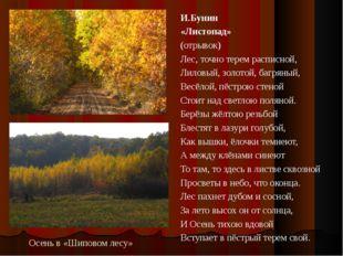 Осень в «Шиповом лесу» И.Бунин «Листопад» (отрывок) Лес, точно терем расписно