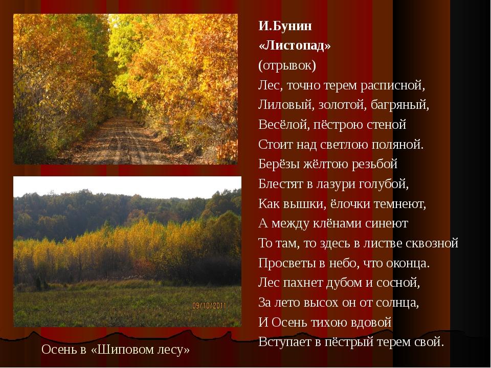 Осень в «Шиповом лесу» И.Бунин «Листопад» (отрывок) Лес, точно терем расписно...