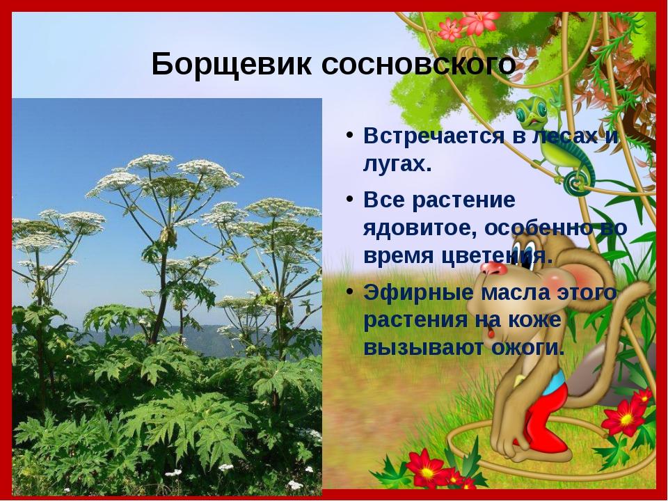 Борщевик сосновского Встречается в лесах и лугах. Все растение ядовитое, особ...