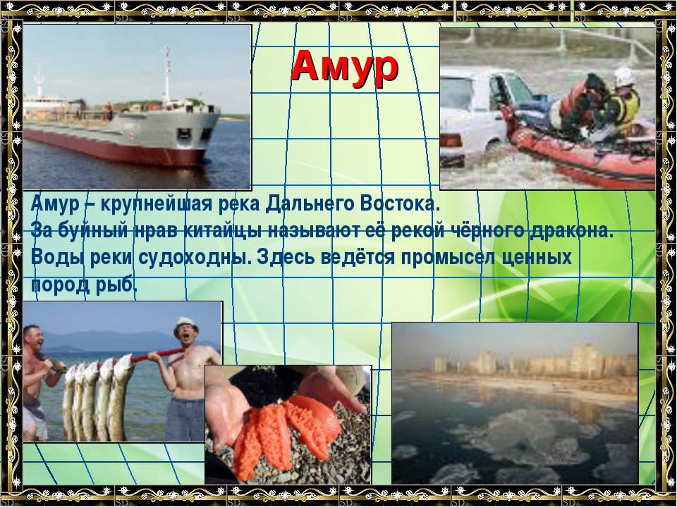 Амур Амур – крупнейшая река Дальнего Востока. За буйный нрав китайцы называю...