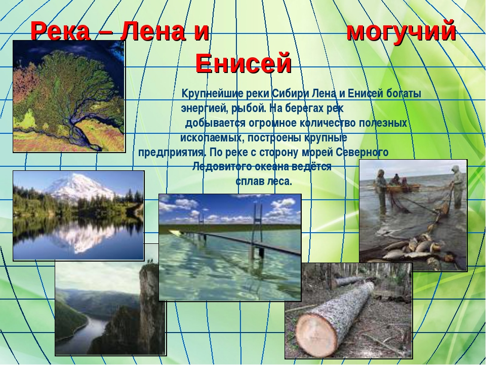 Река – Лена и могучий Енисей Крупнейшие реки Сибири Лена и Енисей богаты энер...