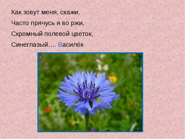 Как зовут меня, скажи. Часто прячусь я во ржи, Скромный полевой цветок, Сине...