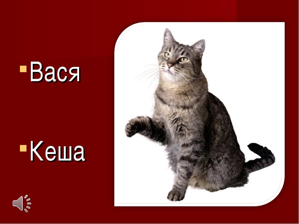Вася Кеша